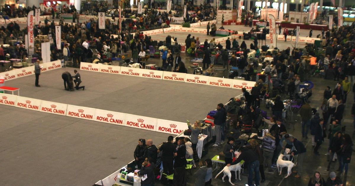 Expocani Calendario.55 Esposizione Internazionale Canina Di Padova Ultimi