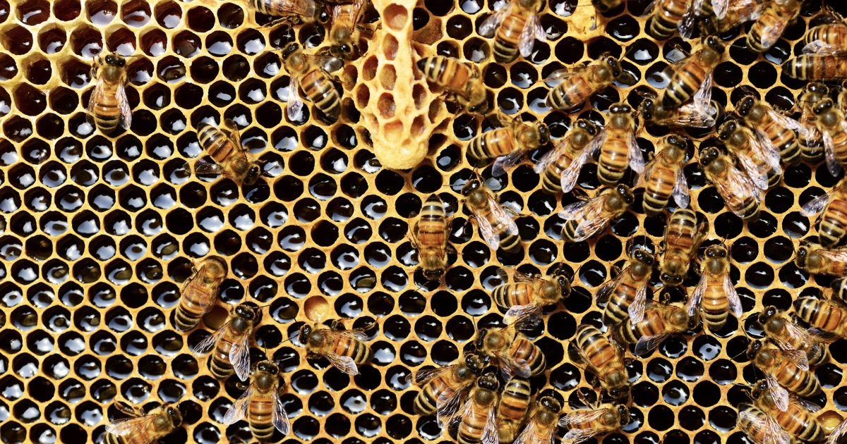 api alveare