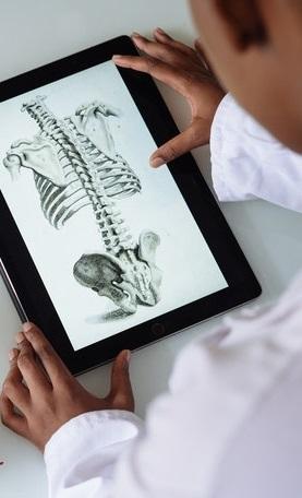 sezione scheletro