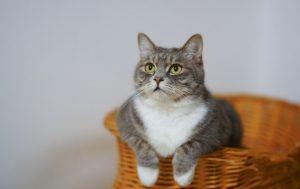 17 febbraio, giornata dedicata ai gatti