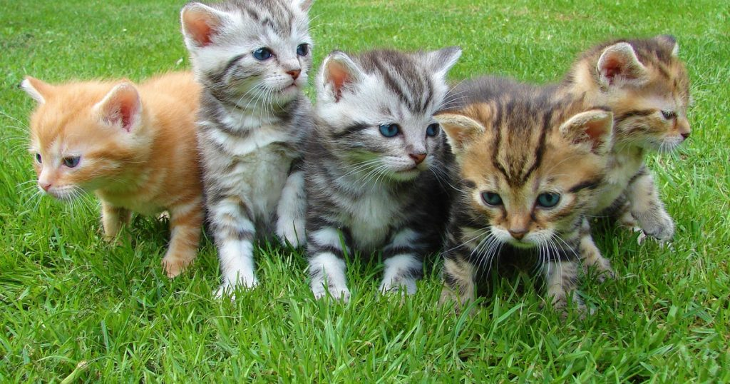 Giornata dedicata ai gatti 2020